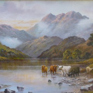 X (SOLD) Highland Cattle