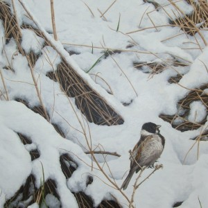 X(SOLD) First Snow (Reed Bunting)