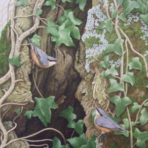 X (SOLD) Nuthatches