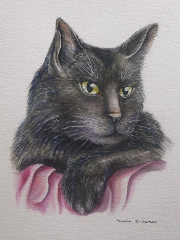 Cat Collection: Proud Black