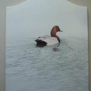 Oil on Panel – Pochard
