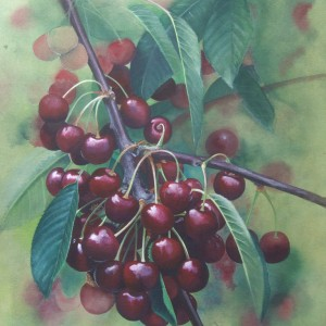 (ref a) Ripe and Ready (Cherries)