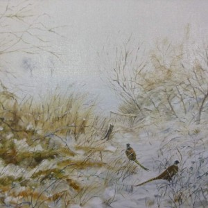 Scenes – Pheasants along the footpath to Braydeston