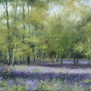 X08 (SOLD) Bluebell 3