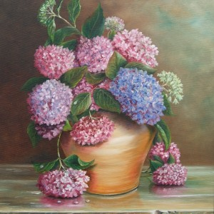 Hydrangeas in Terracotta Pot