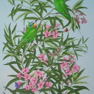 X (SOLD) (ref b) Blue Cheeked Bee Eaters on Oleander