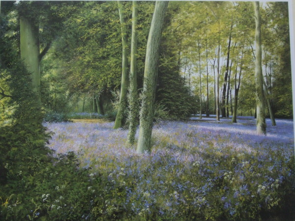 "Signed Limited Print – ""A Bluebell Wood"""