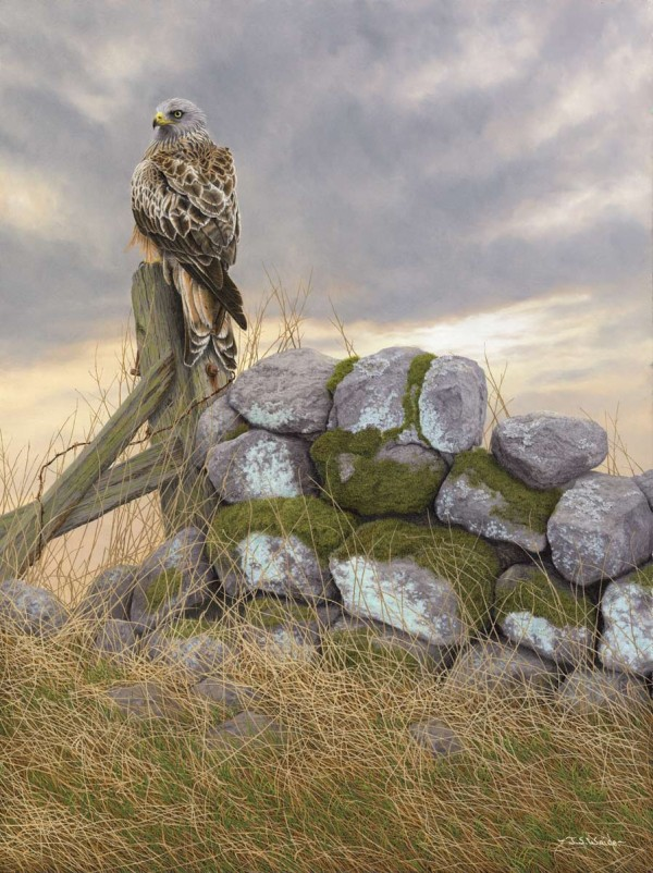 X (SOLD) Surveying the scene (Red Kite)