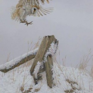 X (SOLD) Snowy Outpost (Barn Owl)