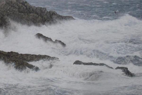 Crashing Surf against the rocks (Herring Gull)