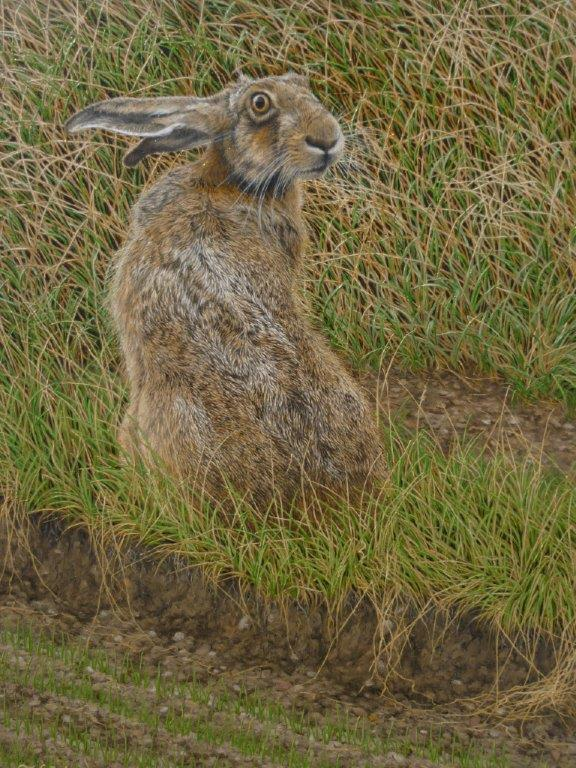 "X (SOLD) ""Looking Back"" (Hare)"