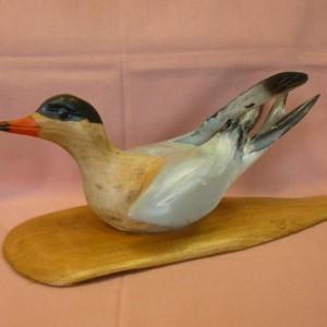 Common Tern (Sycamore)