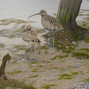 Curlews at Low Tide