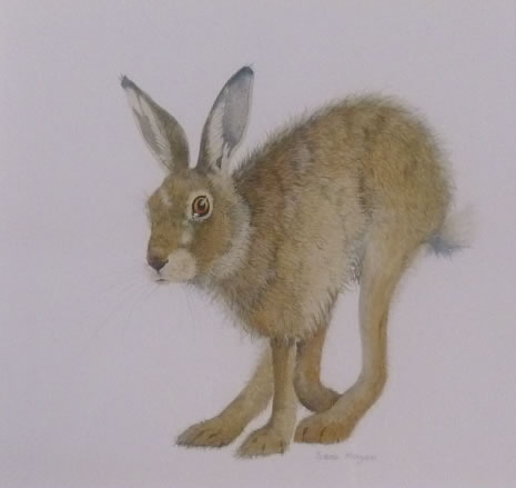 """Hare Collection (SOLD)  """"On the Move"""""""
