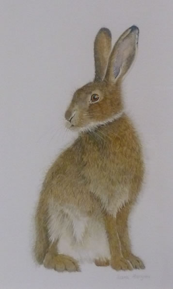 "Hare Collection (SOLD) ""Sitting"""