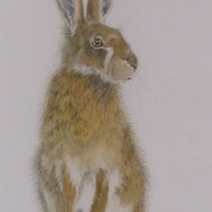 "Hare Collection  (SOLD) ""Ready to Go"""