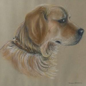 Dog Commission in Pastel (Harvey) Golden Retriever (SOLD)