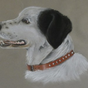 Dog Commission in Pastel (Whisky) Terrier Cross (SOLD)