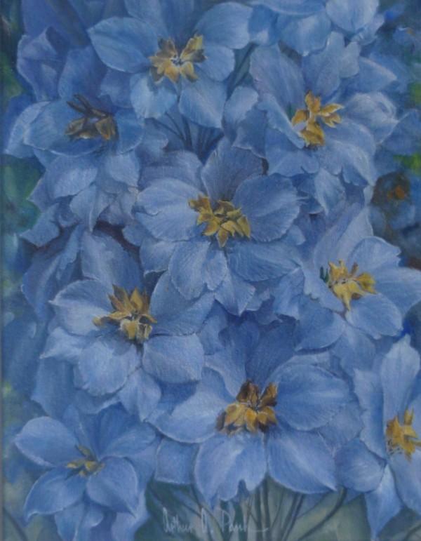 X(SOLD) Delphiniums