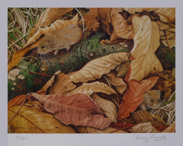 Signed Limited Print – Amongst the Leaves