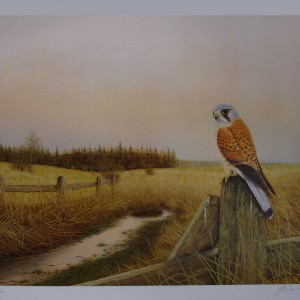 Signed Limited Print – The Kestrel