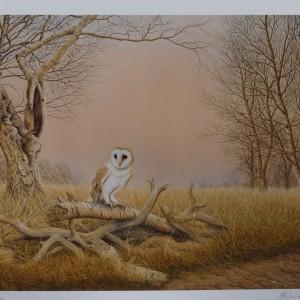 Signed Limited Print – Twilight (Barn Owl)