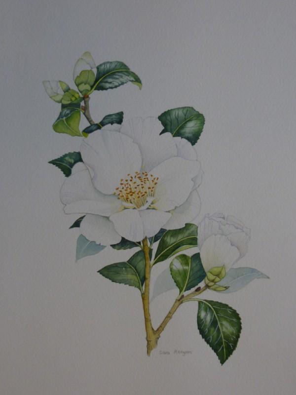 X (SOLD) White Camellia