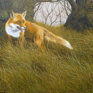 Fox in Long Grass