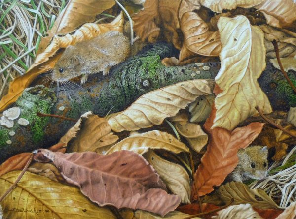 X(SOLD) Amongst the Leaves (Bank Voles)