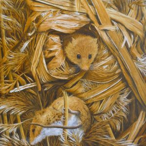 X(SOLD) Harvest Mice