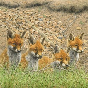 Waiting for Mum! (Fox Cubs)