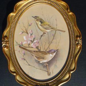 Bird Studies – Chiffchaff and Blackcap on Pink Blossom