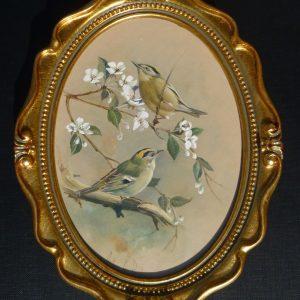 Bird Studies – Goldcrests on White Blossom