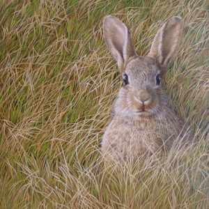 Alert Rabbit – Signs of Spring