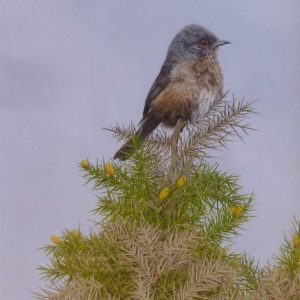 X (SOLD) Dartford Warbler