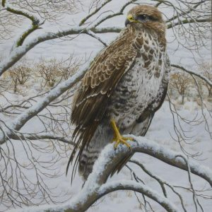 X (SOLD) Buzzard in Winter