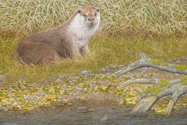 An Otter Resting